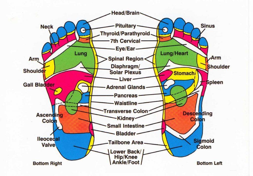 <center>Reflexology Foot Chart</center>